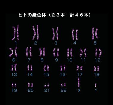 sennshoku1
